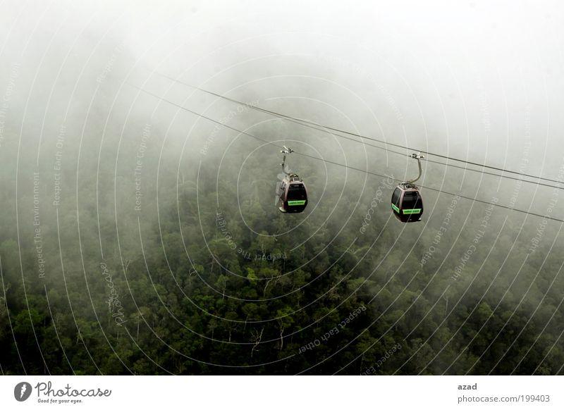 Natur Baum Pflanze Ferien & Urlaub & Reisen Wald Berge u. Gebirge Wärme Landschaft Nebel Insel Tourismus genießen Aktion Seilbahn