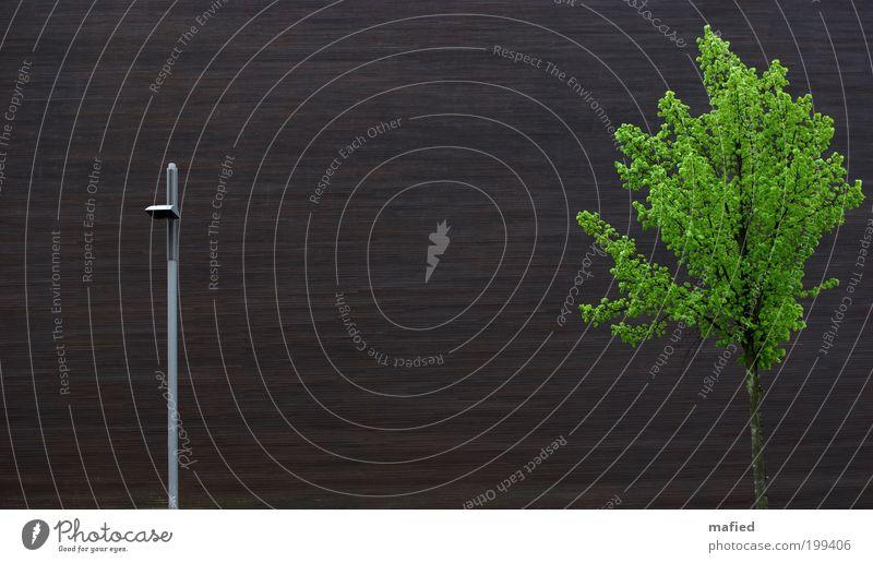 Nord-Süd Dialog #100 Baum grün Pflanze Haus schwarz Wand Frühling Holz grau Mauer Gebäude braun Metall Architektur Fassade