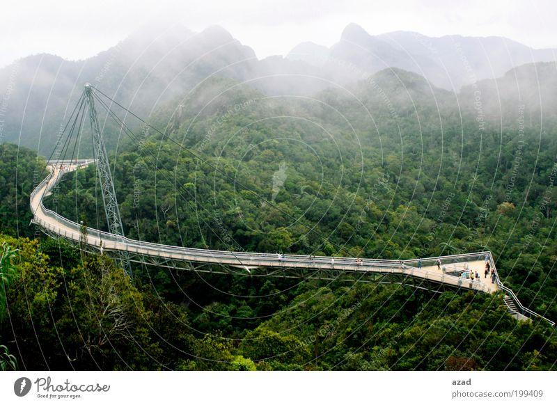 Brücke Ferien & Urlaub & Reisen Tourismus Natur Landschaft Pflanze Nebel Wärme Baum Wald Berge u. Gebirge genießen hängen Farbfoto Außenaufnahme Menschenleer