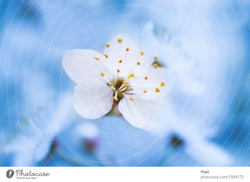 Blühende weiße Frühlingsblumen des Frühlinges Garten Umwelt Natur Landschaft Pflanze Himmel Baum Blume Blatt Blüte frisch natürlich neu weich blau gelb