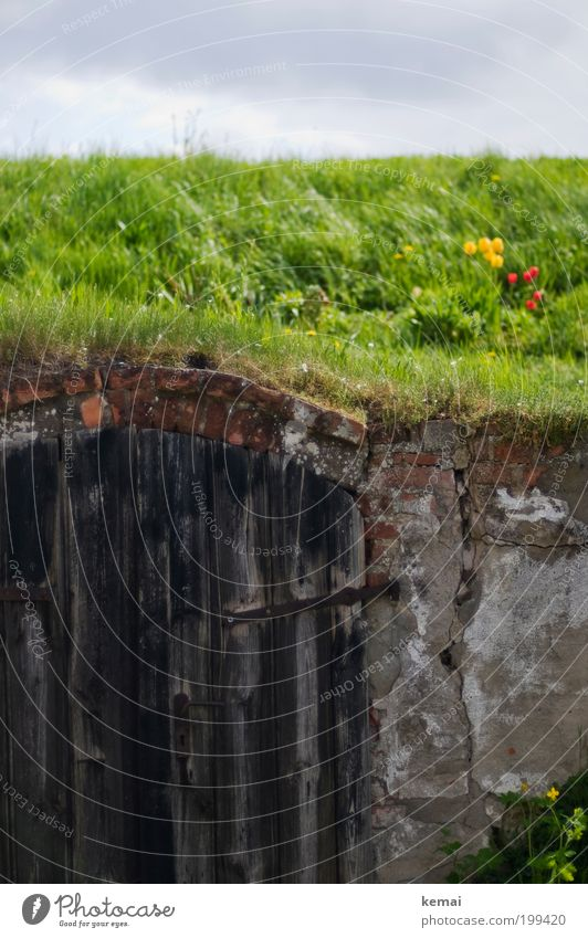 Neulich im Auenland Natur alt Himmel Blume grün Pflanze Sommer Wolken Wiese Wand Blüte Gras Frühling Mauer Wärme Landschaft