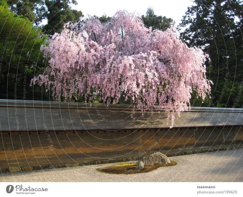 Zeeen... Pflanze Baum Erholung Wand Blüte Frühling Mauer Garten Stein Zufriedenheit Ordnung Erde Blühend Kultur Gelassenheit Wohlgefühl