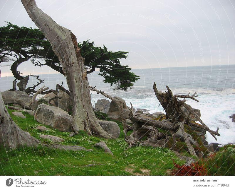 17_miles_drive alt Baum Meer grün Tod Gras Stein Küste Felsen mystisch Wurzel Kalifornien Pazifik Zypresse Highway One
