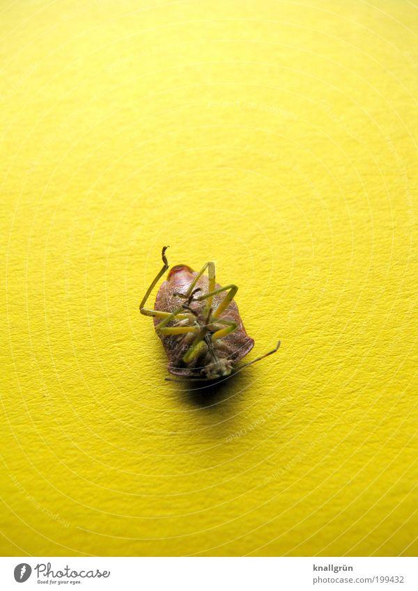 Ich war einmal Natur Tier gelb Gefühle Tod Traurigkeit braun Trauer liegen Insekt Vergänglichkeit Käfer Fühler stagnierend Licht Endzeitstimmung