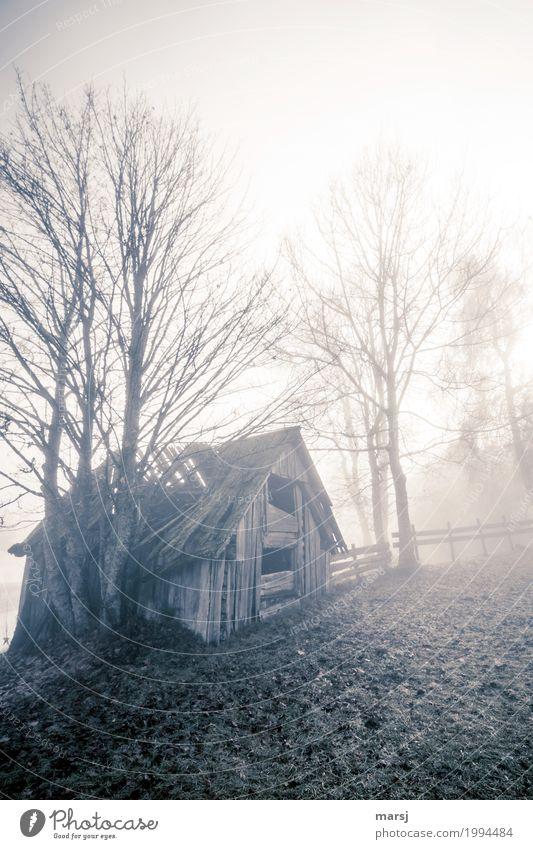 Trüb und regnerisch Einsamkeit kalt Traurigkeit Herbst Nebel Vergänglichkeit Hütte Verfall Ende Sorge Enttäuschung Misserfolg verlieren Unlust Heuschober