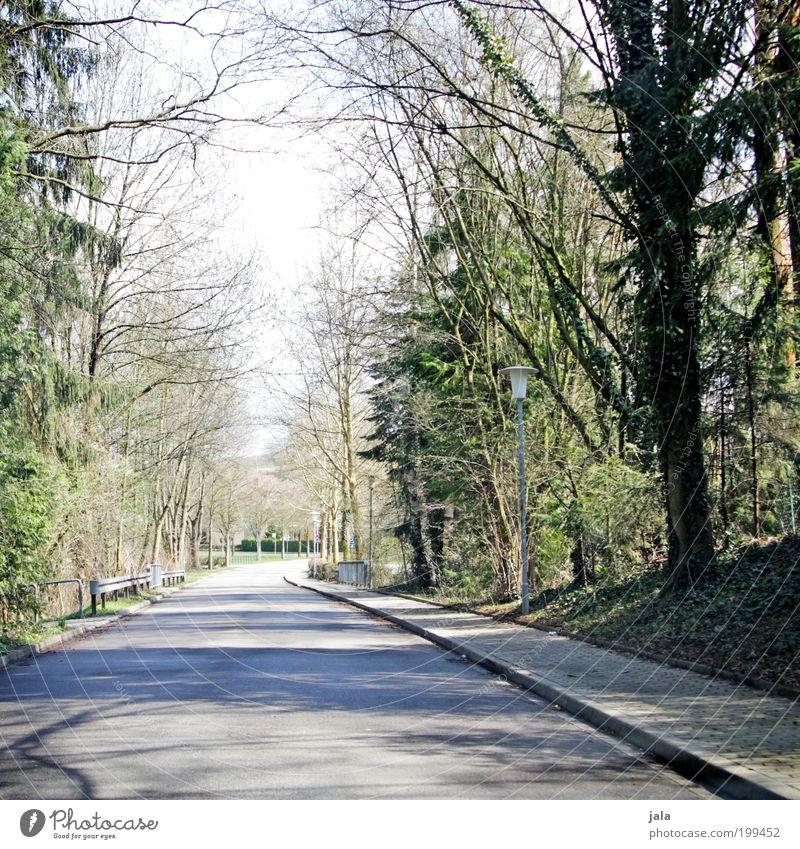 Nachhauseweg Natur Baum Pflanze Straße Frühling Umwelt Sträucher Bürgersteig Schönes Wetter Allee heimwärts Heimweh Grünpflanze Wege & Pfade verkehrsarm