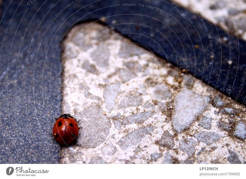 Warten auf den Abschleppdienst Natur rot Tier Straße Bewegung Umwelt Wege & Pfade laufen wandern Verkehr Verkehrswege Sorge Redewendung Käfer Marienkäfer
