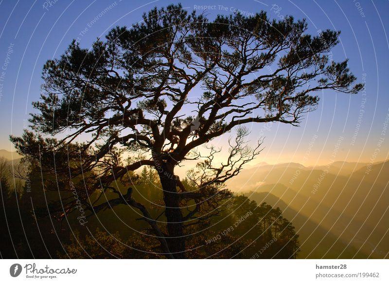 Sonnenuntergang am Gipfel Natur Landschaft Himmel Wolkenloser Himmel Herbst Schönes Wetter Baum Wald Hügel Berge u. Gebirge Zufriedenheit Freizeit & Hobby