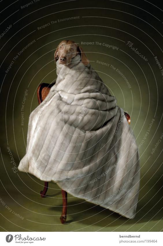 yago elegant Kunst Gemälde Tier Hund 1 außergewöhnlich einzigartig niedlich trashig Wärme braun grau grün Warmherzigkeit Tierliebe Stolz Kraft Vertrauen Wunsch