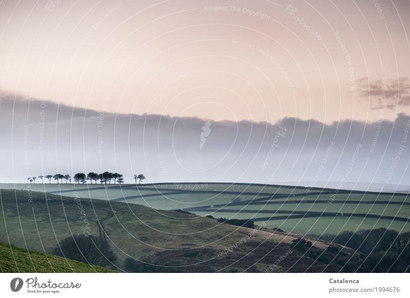 Nostalgie Natur Landschaft Himmel Wolken Horizont Winter Baum Gras Sträucher Wäldchen Feld Hecke Wiese Hügel Moor Schafsweide ästhetisch außergewöhnlich braun