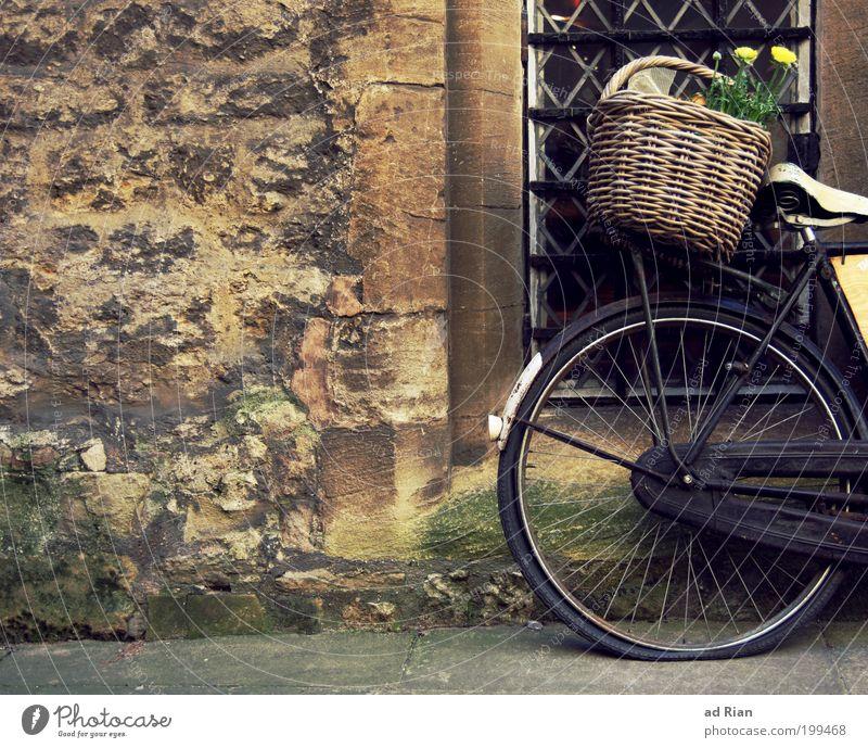 Blumenmakro Stil Korb Menschenleer Haus Mauer Wand Fahrrad alt retro standhaft Farbe Farbfoto Außenaufnahme platt Fahrradreifen Rad Einkaufskorb vergessen
