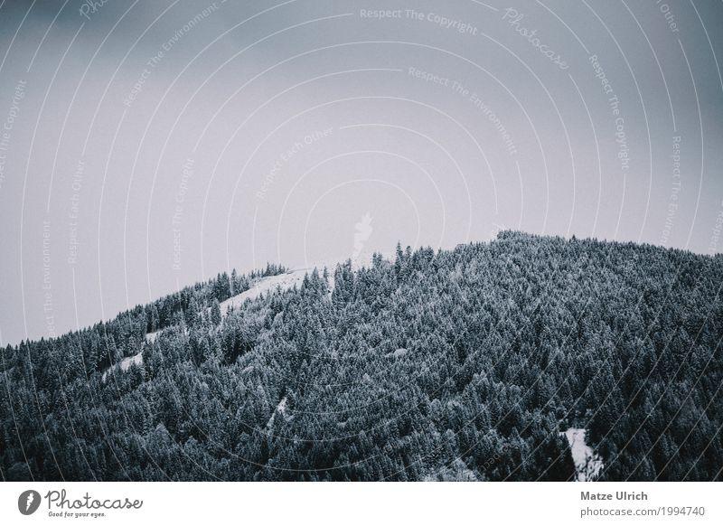 Moody Forest covered in snow Umwelt Natur Landschaft Wolken Winter schlechtes Wetter Schnee Schneefall Wald Hügel Berge u. Gebirge Gipfel Schneebedeckte Gipfel