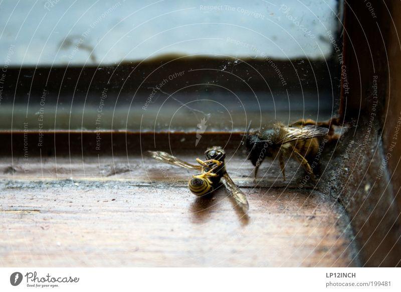Abschied nehmen Umwelt Natur Tier Biene 2 Tierpaar Traurigkeit Sorge Trauer Tod Partnerschaft Überleben Ecke Farbfoto Innenaufnahme Nahaufnahme
