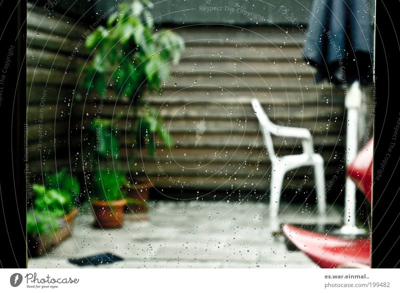 schwimmbad fällt ins wasser. Pflanze kalt Garten Regen Wassertropfen nass ästhetisch Wachstum Stuhl Kräuter & Gewürze Möbel Balkon Sonnenschirm Terrasse Grünpflanze schlechtes Wetter