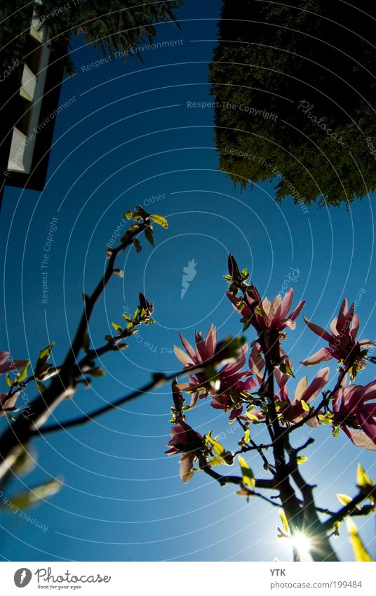 Earth View Himmel Natur blau Pflanze Baum Sonne Farbe Umwelt Frühling Blüte hell Luft rosa Erde Wachstum Urelemente