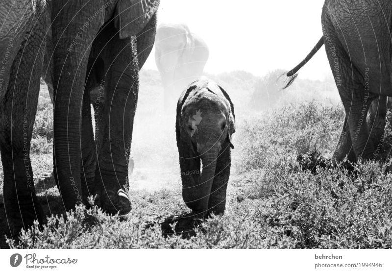 mittendrin, statt nur dabei:) Ferien & Urlaub & Reisen Tourismus Ausflug Abenteuer Ferne Freiheit Safari Natur Pflanze Sträucher Park Südafrika