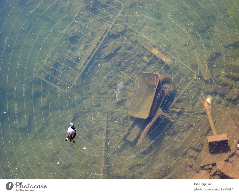Die Ruhr ist sauber Umwelt Natur Wasser Fluss Tier Vogel Teichhuhn 1 Schubkarre Absperrgitter Metall dreckig kaputt trist braun grün schwarz chaotisch Desaster