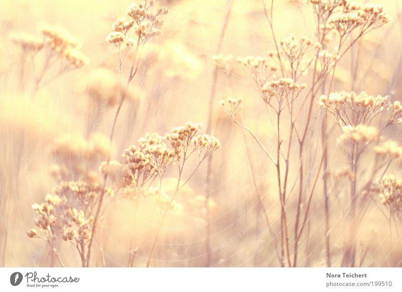 moments of sun Natur Pflanze schön Sommer Landschaft Umwelt gelb Leben Blüte Frühling Wiese Glück Stimmung Wachstum gold Sträucher