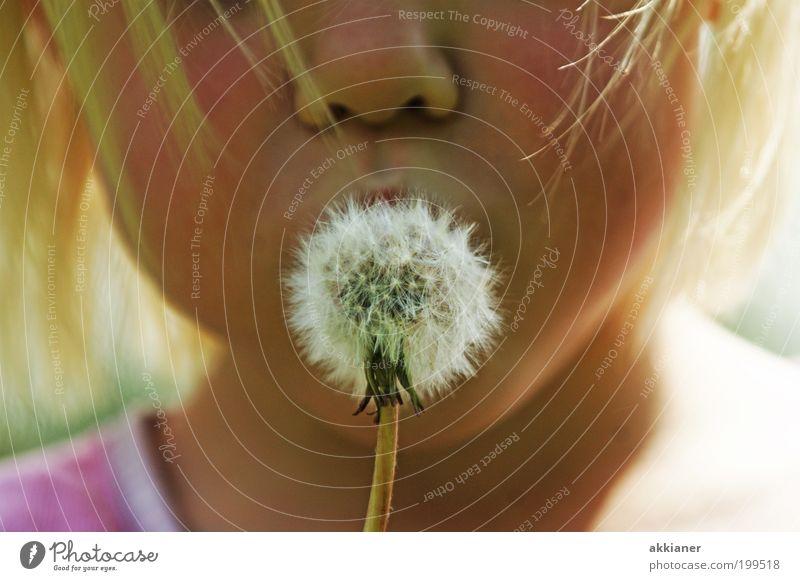 Pusteblume Mensch Kind Mädchen Kindheit Haut Kopf Haare & Frisuren Nase Mund Lippen Umwelt Natur Pflanze Urelemente Luft Sommer Wärme Blume hell schön weiß