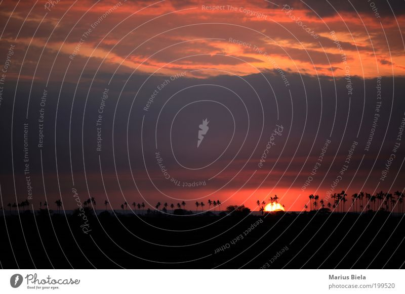 Apokalypse now! Strand Ferien & Urlaub & Reisen ruhig Landschaft Insel Lebensfreude Sehnsucht Palme Schönes Wetter Fernweh Abenddämmerung Heimweh Oase Baum