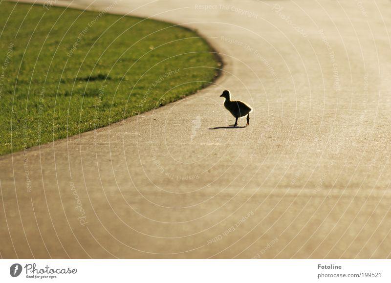 ausgebüxt II Natur Pflanze Tier Straße Gras Wege & Pfade Park Wärme Landschaft Vogel gehen laufen Umwelt Erde Spaziergang