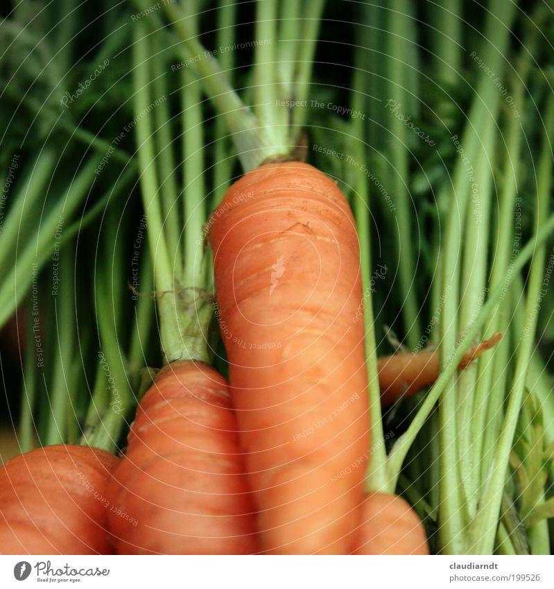 Fotografenfutter grün Pflanze Gesundheit orange Lebensmittel frisch Ernährung Gemüse Appetit & Hunger Bioprodukte Vitamin Möhre Vegetarische Ernährung