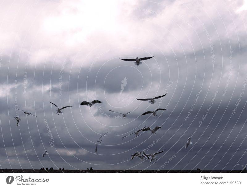 Kleine weiße Friedensmöwe... Himmel Meer Wolken Landschaft Küste Wetter Vogel fliegen Klima Sturm Mut führen Schweben Möwe Ostsee aufsteigen