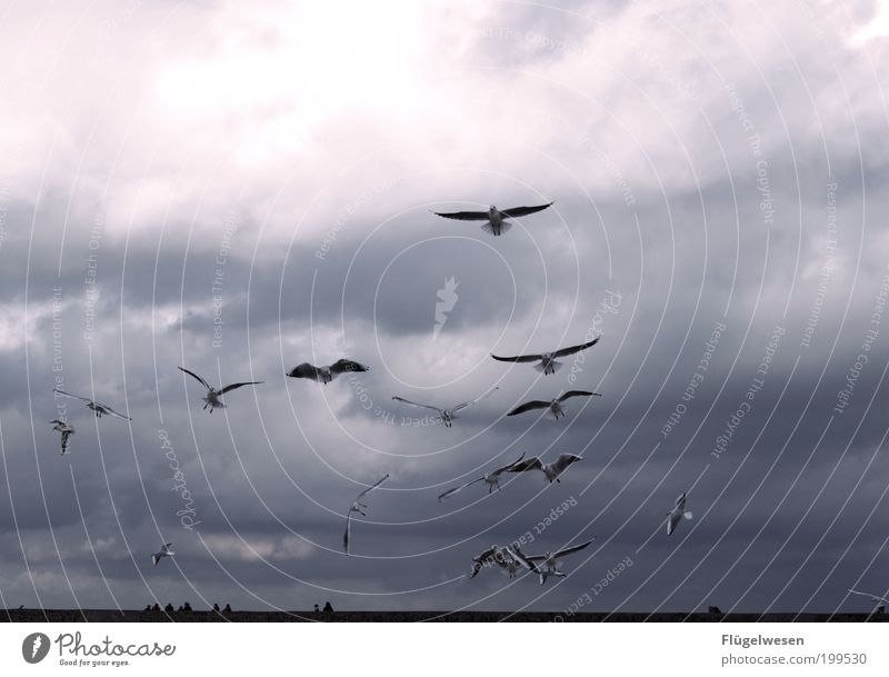 Kleine weiße Friedensmöwe... Landschaft Himmel Klima Klimawandel Wetter Küste Vogel fliegen Willensstärke Mut Tatkraft Möwe Ostsee Mecklenburg-Vorpommern Meer
