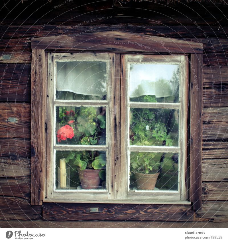 Im Kaschubenland Polen Europa Dorf Haus Hütte Fenster alt einfach historisch braun Symmetrie Vergangenheit Fensterscheibe Holz Holzfenster Blume Pelargonie