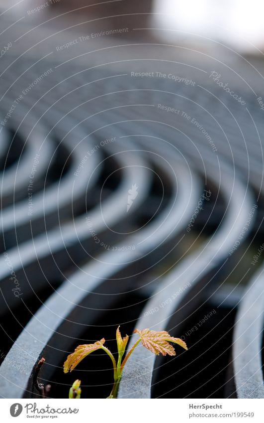 Wenn ich mal groß bin... Pflanze Blatt Leben grau Metall Wachstum Muster Gitter Überleben Grünpflanze geschwungen Detailaufnahme sprießen Naturwuchs Unkraut