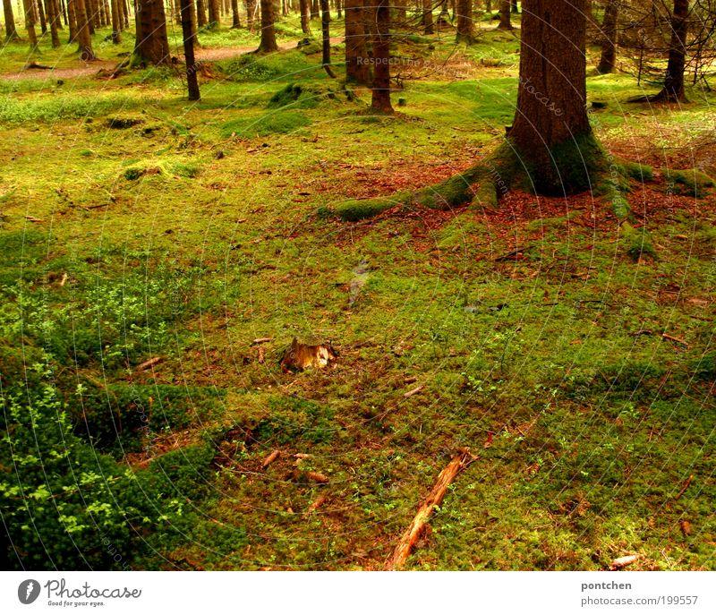 Waldesruh Natur Baum grün Pflanze Wald Erholung Gras Frühling Holz Wege & Pfade braun Kraft Umwelt Ausflug weich wild