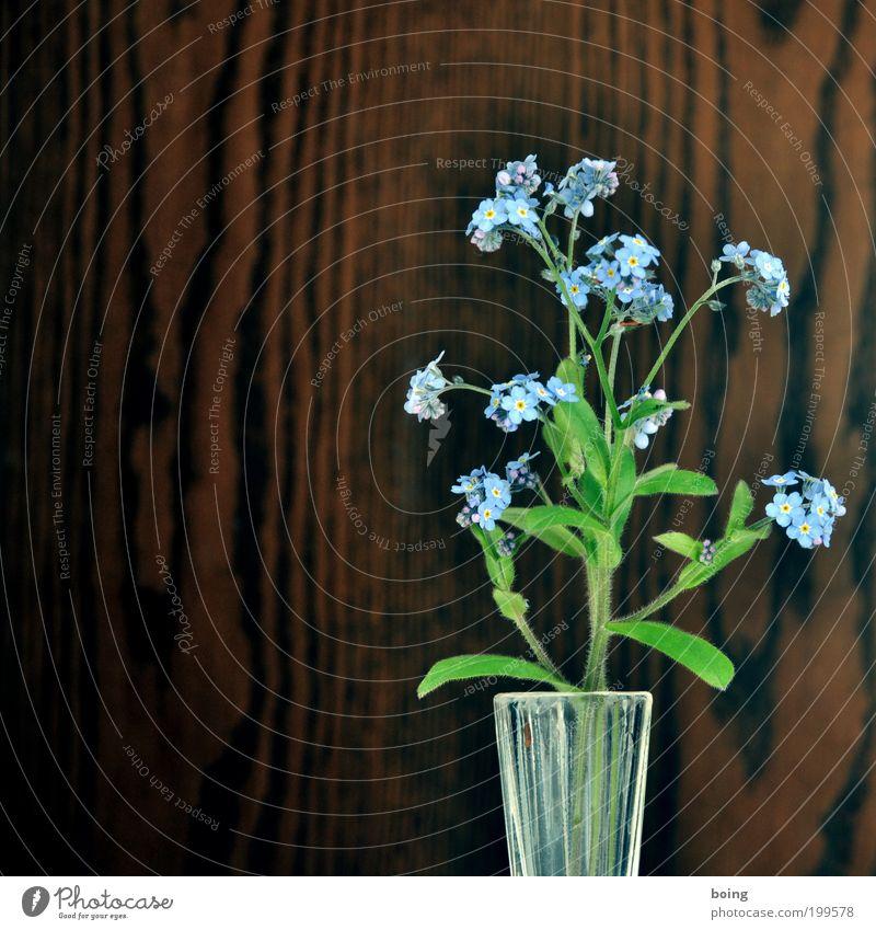 Vergissmeinnicht Blume blau Häusliches Leben Holzwand Textfreiraum links Gebäude Vergißmeinnicht Blumenvase