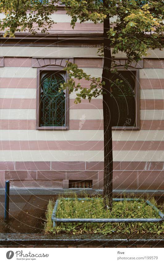 blumenmakro II Frühling Pflanze Baum Stadt Haus Bauwerk Gebäude Fassade Fenster nass Sauberkeit Streifen Gras Zürich Schweiz Farbfoto Außenaufnahme Tag