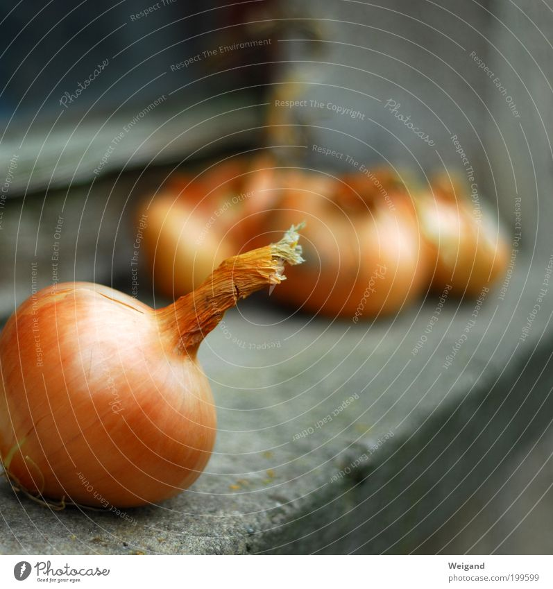 Die besten Zutaten für leckeren Zwiebelkuchen Lebensmittel Gemüse Ernährung Bioprodukte Vegetarische Ernährung gold grau Landleben Gesundheit orange Farbfoto
