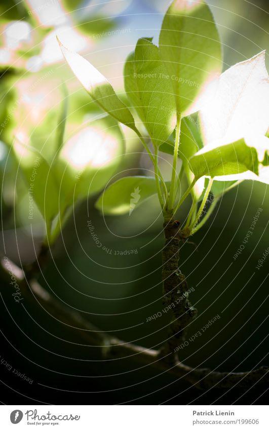 sunlight hit the leafes Natur schön Baum grün Pflanze ruhig Blatt Leben Frühling hell Beleuchtung Umwelt zart Blühend Zweig Blütenknospen