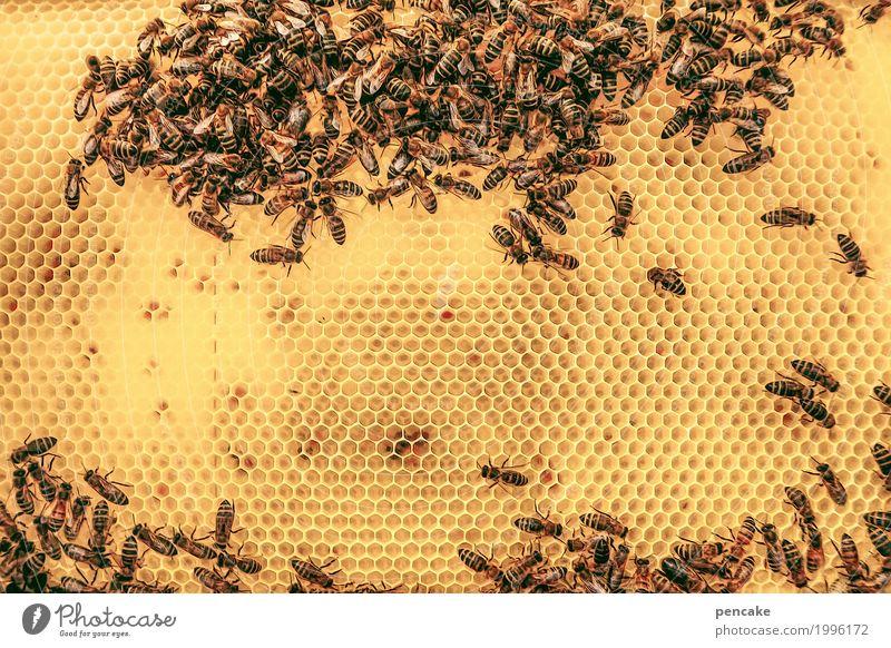honig   süß Lebensmittel Tier Wildtier Schwarm authentisch nachhaltig klug stachelig stark viele gelb Biene Bienenwaben Bienenstock Honig Honigbiene Wabenmuster