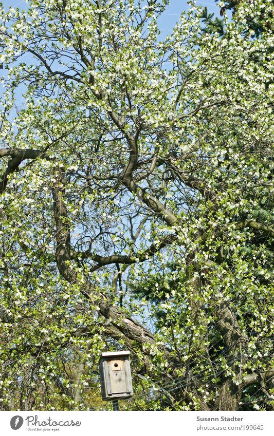 Vogelhäuschen Baum Park Häusliches Leben Futterhäuschen Blühend Blüte Rückzug brütend Brutkasten Frühling Himmel grün Gedeckte Farben Vogelperspektive