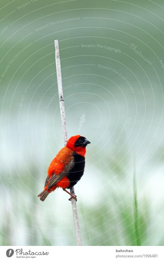 jeder sollte einen haben... Natur Ferien & Urlaub & Reisen Pflanze schön rot Erholung Tier Ferne klein außergewöhnlich Freiheit Tourismus Vogel fliegen Ausflug