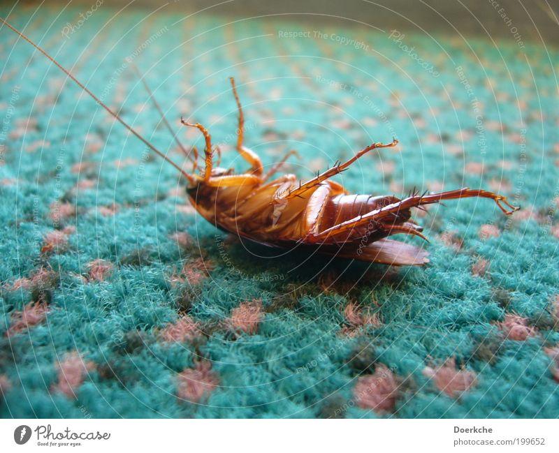 Faulpelz Tier Tod Ende Insekt Ekel Teppich Schädlinge Wanze Schädlingsbekämpfung Gemeine Küchenschabe Punktmuster Totes Tier
