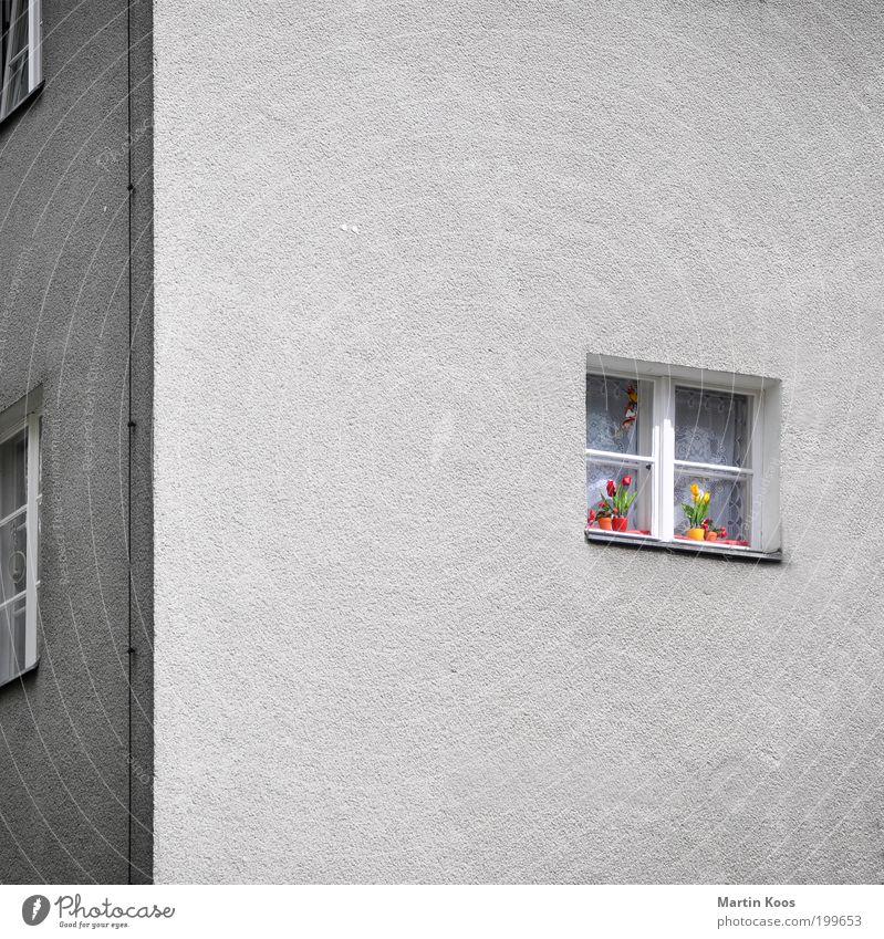 Farbe Häusliches Leben Haus Blühend alt grau trist Fassade Fenster Blume Tulpe Blumentopf Dekoration & Verzierung mehrfarbig Farbfleck Blitzableiter Ecke Stadt