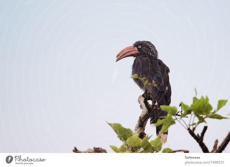 ganz oben angekommen Natur Ferien & Urlaub & Reisen Baum Tier Ferne Umwelt natürlich Freiheit Vogel Ausflug Wildtier Abenteuer Flügel Tiergesicht Schnabel