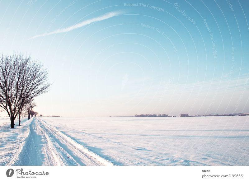 Wintermärchen Himmel Natur schön weiß Baum Einsamkeit Winter Landschaft Ferne Umwelt kalt Schnee Wege & Pfade hell Horizont träumen