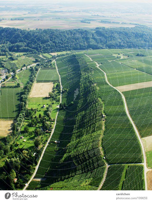 T Umwelt Natur Landschaft grün Weinberg Wald Wege & Pfade Luftaufnahme Weinbau Ackerbau Landwirtschaft Landschaftsformen tiefstehend Farbfoto Außenaufnahme