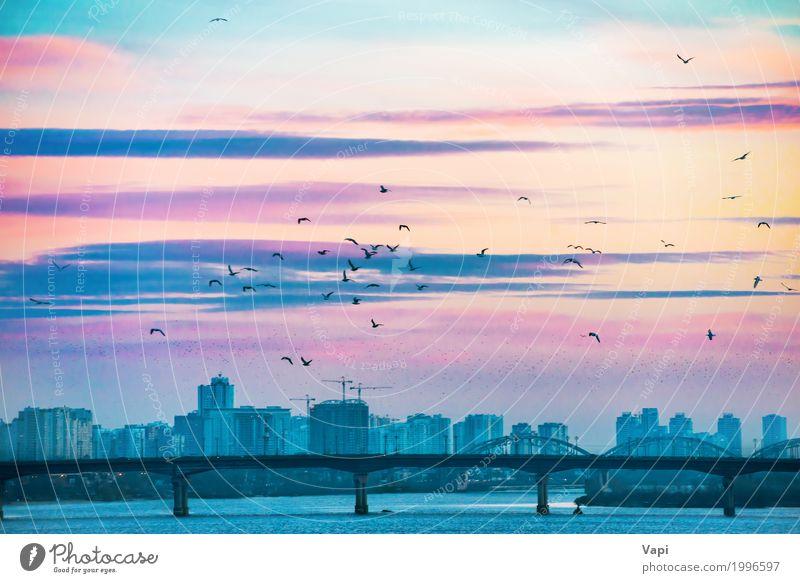 Großartige Sonnenuntergangstadtansicht mit Brücke Himmel Natur Ferien & Urlaub & Reisen blau Sommer Stadt Wasser Landschaft rot Wolken Haus schwarz Architektur