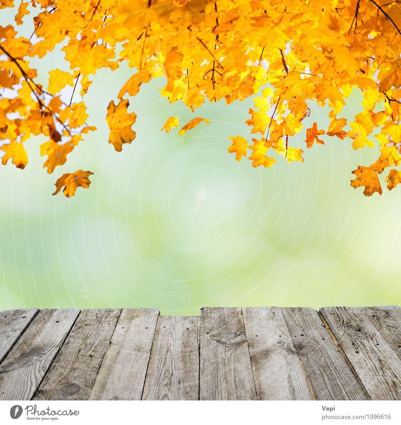 Orange Herbstblätter über hölzernem Schreibtisch Natur alt Pflanze Sommer schön grün Baum rot Blatt Wald Umwelt gelb natürlich Stil Holz