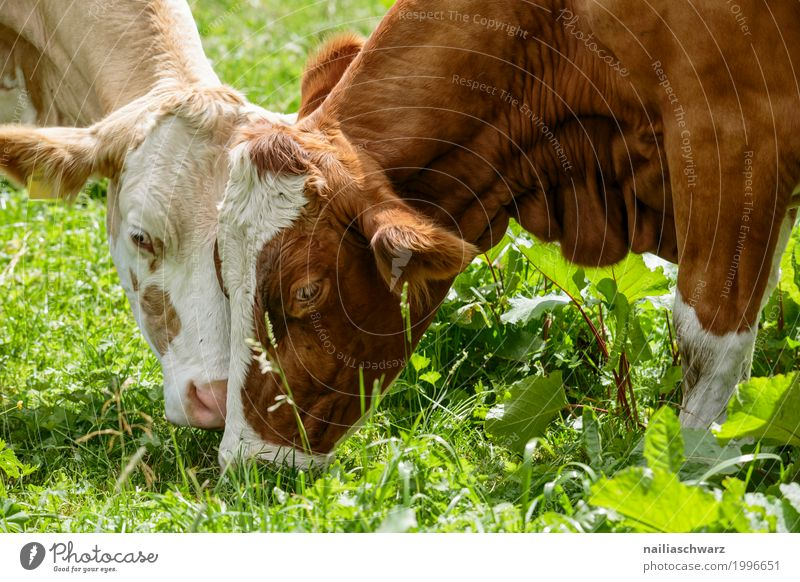 Zärtlichkeit Natur Sommer Erholung Tier Umwelt Frühling Wiese natürlich Gras Glück Zusammensein Freundschaft Feld Idylle Europa Landwirtschaft