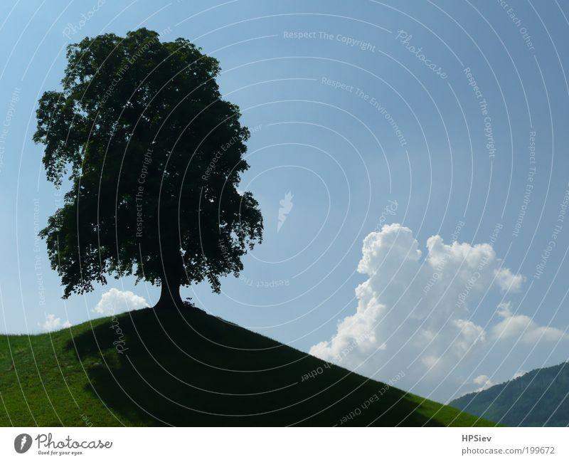 Solist Himmel Baum Sommer Wiese Landschaft Kraft Hügel Schönes Wetter standhaft Gewitterwolken