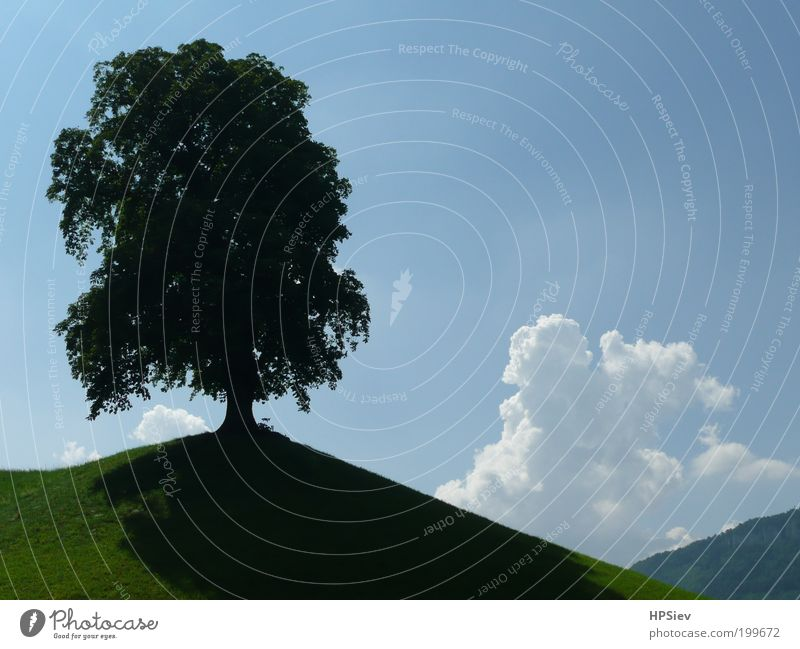 Solist Landschaft Himmel Gewitterwolken Sommer Schönes Wetter Baum Wiese Hügel Kraft standhaft Farbfoto Außenaufnahme Menschenleer Tag Kontrast Gegenlicht