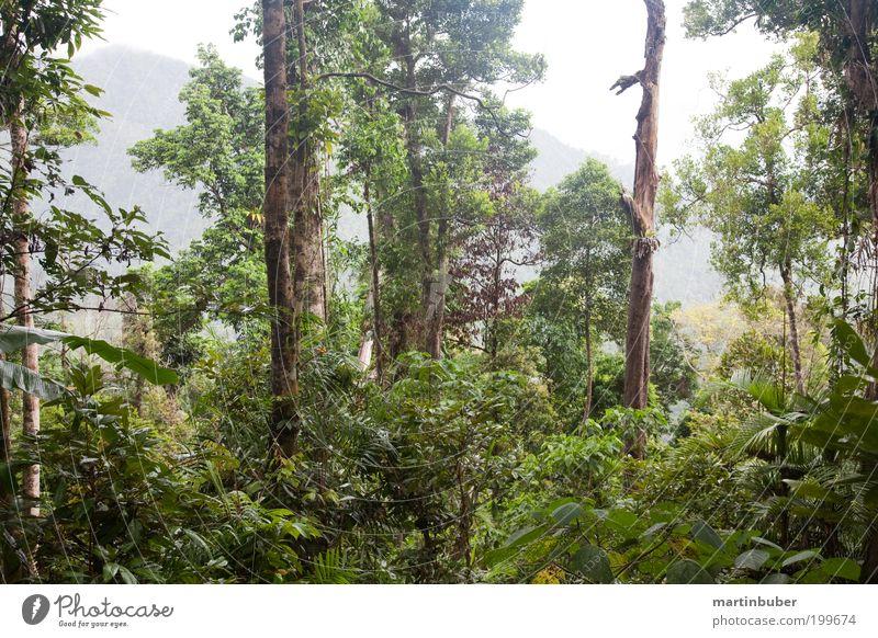 rainforest Natur schön grün Pflanze Sommer ruhig Wald Erholung Wärme Regen Landschaft Stimmung Nebel Umwelt Hoffnung ästhetisch