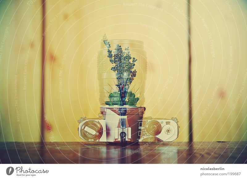 Requiescat in pace Pflanze Kaktus exotisch Holz Metall kaputt schön Traurigkeit Trauer Tod Gefühle einzigartig Leidenschaft Surrealismus Doppelbelichtung pentax